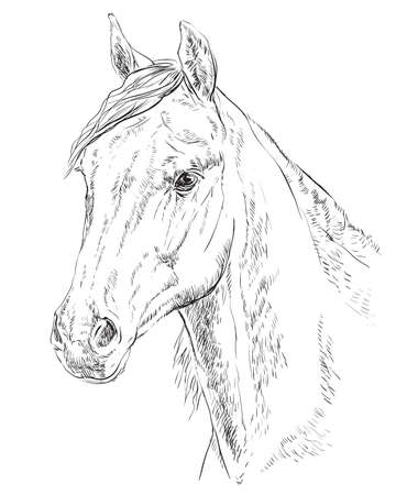 Arabian horse portrait. Horse head  in profile in monochrome color isolated on white background. Vector hand drawing illustration