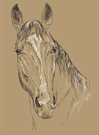 Horse portrait vector illustration