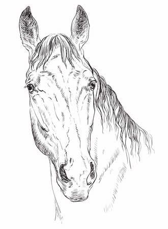 馬の肖像画ベクトルイラスト  イラスト・ベクター素材