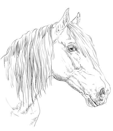 Orlov Trotter horse portrait. Horse head  in profile in monochrome color isolated on white background. Vector hand drawing illustration