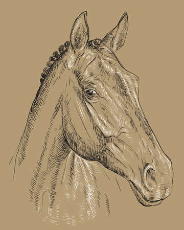 Trakehner horse portrait vector illustration