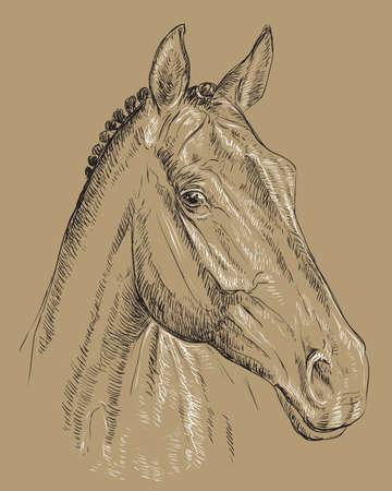 Trakehner horse portrait vector illustration