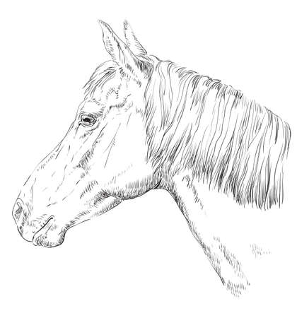 Horse portrait. Horse head with long mane in profile in monochrome color isolated on white background. Vector hand drawing illustration