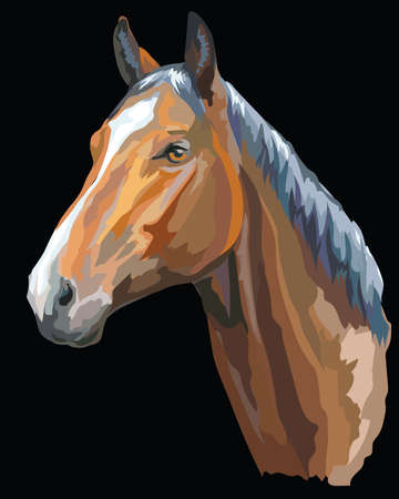 Colored portrait of Trakehner horse. Horse head  in profile isolated vector illustration on black background