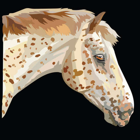 Colored portrait of Appaloosa horse. Horse's spotted head in profile isolated vector illustration on black background Stock Vector - 97412505