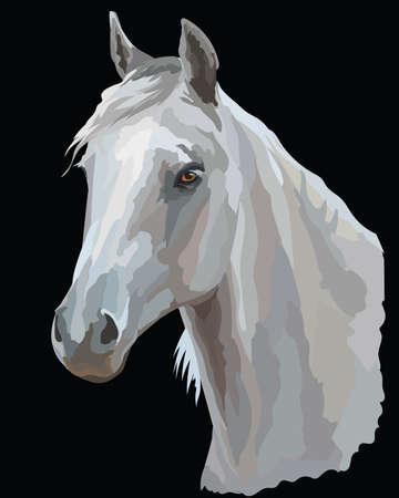 Portrait coloré de cheval blanc blanc. tête de cheval dans le profil isolé illustration vectorielle sur fond noir Banque d'images - 97412504