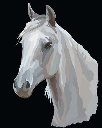 Colored portrait of white Arabian horse. Horse head  in profile  isolated vector illustration on black background