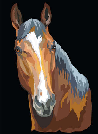 Colored portrait of Trakehner horse. Horse head isolated vector illustration on black background
