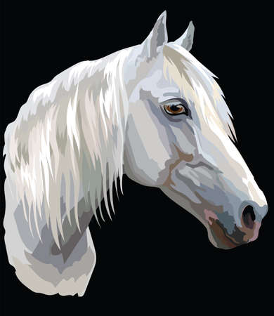 Colored portrait of white Orlov Trotter horse. Horse head with long mane in profile isolated vector illustration on black background