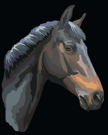 Colored portrait of  black Trakehner horse. Horse head in profile isolated vector illustration on black background