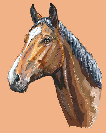 Colorful portrait of Trakehner horse. Horse head  in profile isolated vector hand drawing illustration on beige background Vettoriali