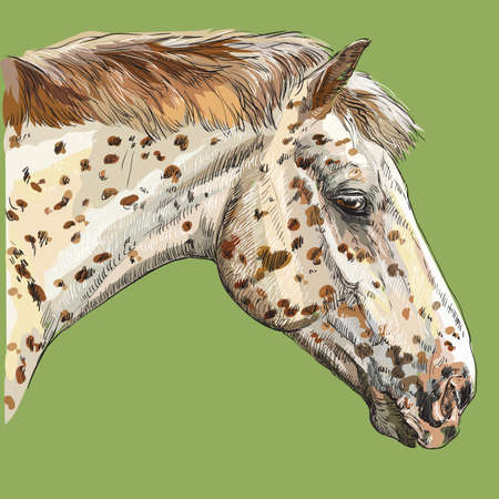 Colorful portrait of Appaloosa horse. Horses spotted head in profile isolated vector hand drawing illustration on green background
