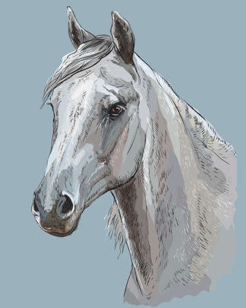Colorful portrait of white Arabian horse. Horse head with long mane in profile isolated vector hand drawing illustration on blue-grey background