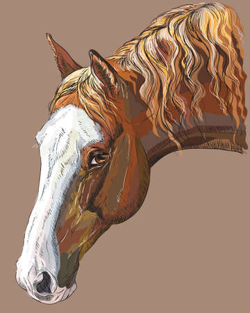 Colorful portrait of dark palomino horse. Horse head with long mane in profile isolated vector hand drawing illustration on cocoa color background