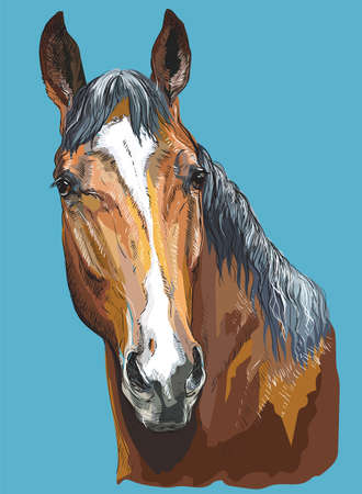 Colorful portrait of Trakehner horse. Horse head- isolated vector hand drawing  illustration on blue background