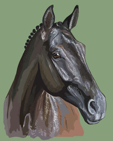 Colorful portrait of Trakehner horse. Horse head in profile isolated vector hand drawing  illustration on green background