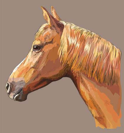 Colorful portrait of sorrel horse. Horse head with long mane in profile isolated vector hand drawing illustration on grey background Illustration