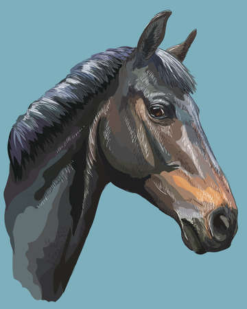 Colored portrait of black Trakehner horse. Horse head in profile isolated vector hand drawing illustration on blue background