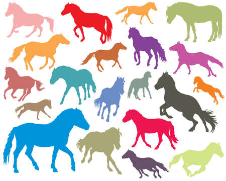 Vector isolated colorful standing, trotting and galloping horses (Norwegian fjord pony) silhouettes on white background Фото со стока - 97459820