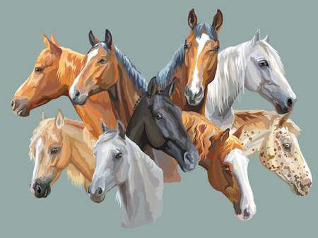 灰色の背景に隔離された馬の品種(トラケナー馬、ウェールズポニー、オルロフトロッター、アラビア馬、アパルーサ馬)のカラフルなベクターポート