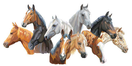 Set of colorful vector portraits of horses breeds (Trakehner horse, Welsh Pony, Orlov Trotter, Arabian horse, Appaloosa horse) isolated on white background