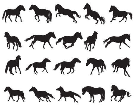 Vector isolated horses (Norwegian fjord pony) silhouettes standing, trotting and galloping in black color on white background