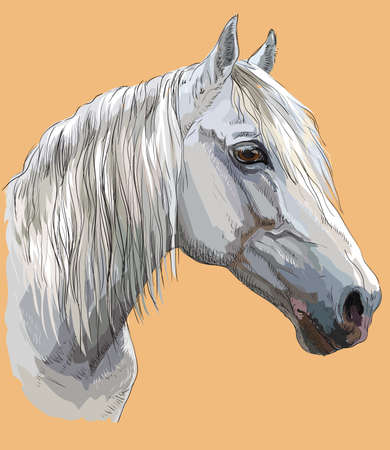 Colorful portrait of white Orlov Trotter horse. 일러스트