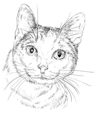 Esquema del vector monocromo retrato de gato curioso curioso en el hombre negro. ilustración de la mano de dibujo aislado en el fondo blanco Foto de archivo - 98090336