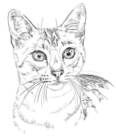Vector outline monochrome portrait of curious Egyptian Mau Cat in black color. Hand drawing Illustration isolated on white background