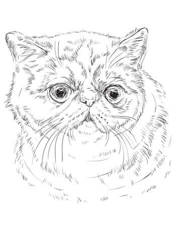 Retrato blanco del esquema del vector del gato curioso y enojado del gato afroamericano en el vector . ilustración de dibujo mano aislado sobre fondo blanco Foto de archivo - 98077346