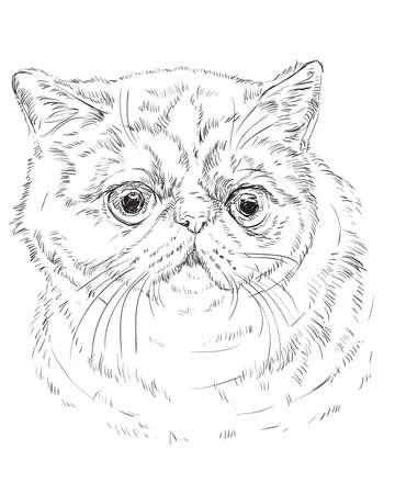 Vector outline monochrome portrait of curious and surprised Exotic Shorthair Cat in black color. Hand drawing Illustration isolated on white background