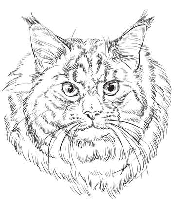 Vector outline monochrome portrait of fluffy and angry Maine Coon Cat in black color.
