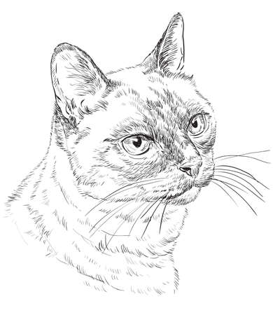Vector outline monochrome portrait of curious Thai Cat in black color. Hand drawing Illustration isolated on white background