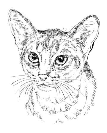Vector outline monochrome portrait of curious Abyssinian Cat in black color. Hand drawing Illustration isolated on white background Иллюстрация