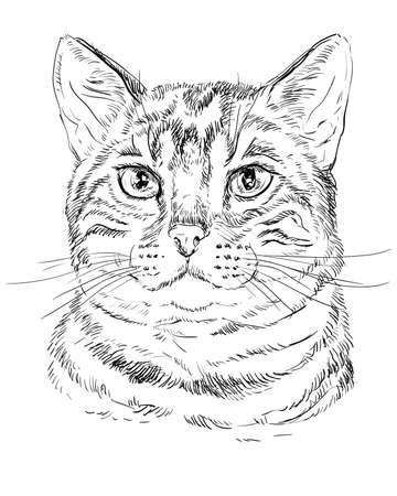 Vector outline monochrome portrait of tabby curious Bengal Cat in black color. Hand drawing Illustration isolated on white background