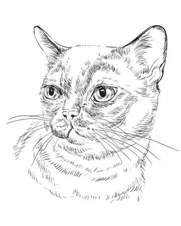 Vector outline monochrome portrait of curious Burmese cat in black color. Hand drawing Illustration isolated on white background