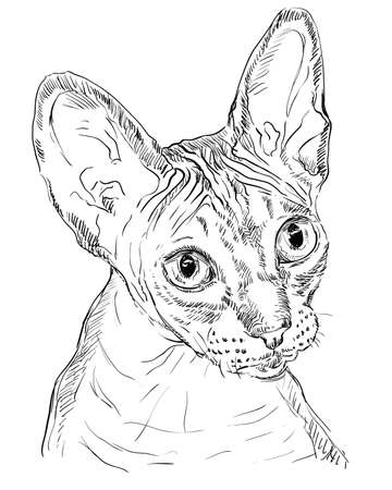 Vector outline monochrome portrait of hairless curious Sphynx Ð¡at in black color. Hand drawing Illustration isolated on white background