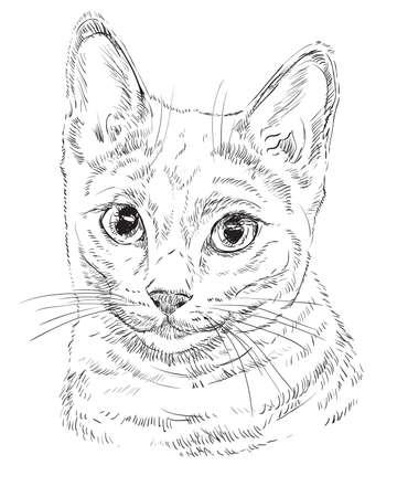 Esquema del vector monocromo retrato de gato azul ruso curioso en el hombre negro. ilustración de la mano de dibujo aislado en el fondo blanco Foto de archivo - 98077348