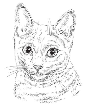 Vector outline monochrome portrait of curious Russian Blue Cat in black color. Hand drawing Illustration isolated on white background
