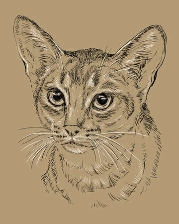 Vector outline monochrome portrait of curious Abyssinian Cat in black and white colors. Stok Fotoğraf - 98410858