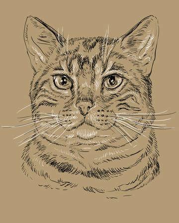 Contour vectoriel portrait monochrome de tabby curieux du Bengale à ¡at en couleurs noir et blanc. Illustration dessin main isolé sur fond marron