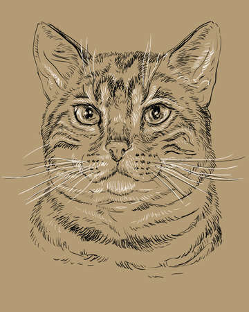 Vector outline monochrome portrait of tabby curious Bengal Сat in black and white colors. Hand drawing illustration isolated on brown background