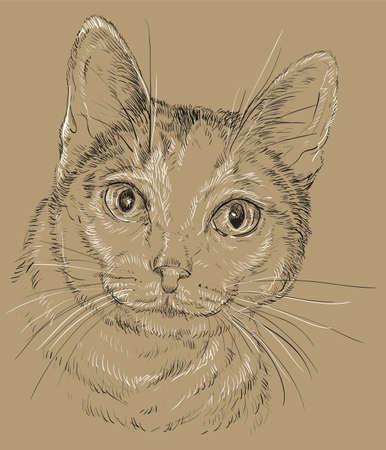 Esquema del vector monocromo retrato de gato curioso curioso en blanco y negro de los modelos de la vendimia. ilustración de color aislado en el fondo marrón Foto de archivo - 98090346