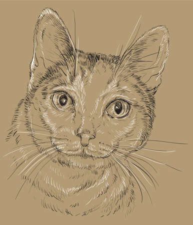 Vector outline monochrome portrait of curious Mongrel cat in black and white colors. Hand drawing illustration isolated on brown background