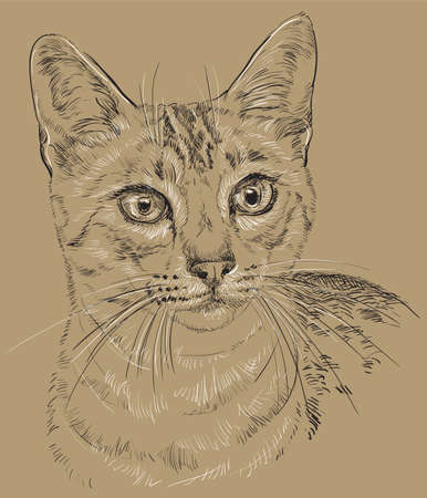Vector outline monochrome portrait of curious Egyptian Mau Cat in black and white colors. Hand drawing illustration isolated on brown background