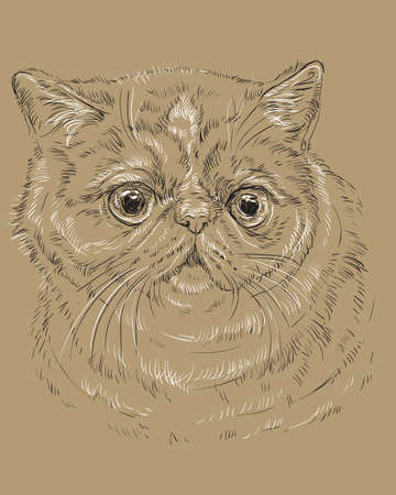 Vector outline monochrome portrait of curious and surprised Exotic Shorthair Cat in black and white colors. Hand drawing illustration isolated on brown background