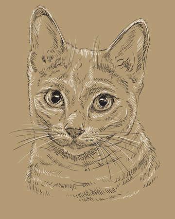 Esquema del vector monocromo retrato de gato azul ruso curioso en colores blanco y negro . ilustración de los ojos de la mano aislado en el fondo marrón Foto de archivo - 98090348