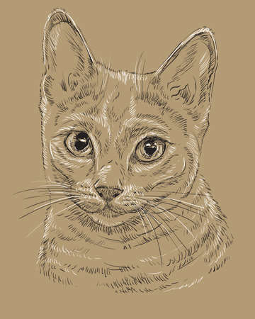 Vector outline monochrome portrait of curious Russian Blue Cat in black and white colors. Hand drawing illustration isolated on brown background Ilustrace