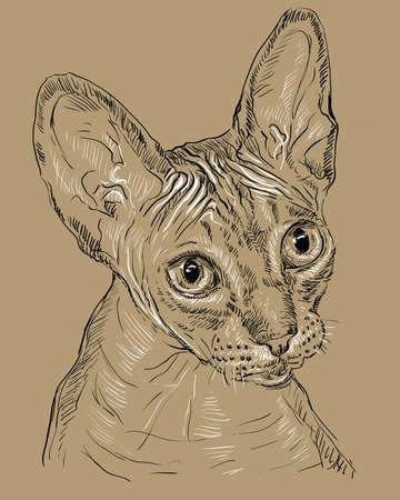 黒と白の色の無毛の好奇心スフィンクス猫のベクターアウトラインモノクロポートレート。茶色の背景に隔離された手描きのイラスト