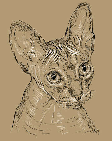 Vector outline monochrome portrait of hairless curious Sphynx cat in black and white colors. Hand drawing illustration isolated on brown background Foto de archivo - 98090347